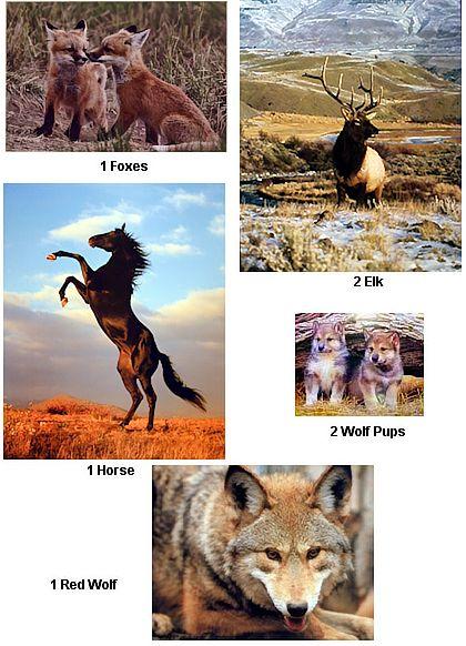 wildlife animal posters wholesale