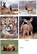 "8 American Wildlife 16x20"" Art Prints - One price for all!"