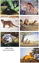 "8 Jungle Cats 16x20"" Art Prints - One price for all!"