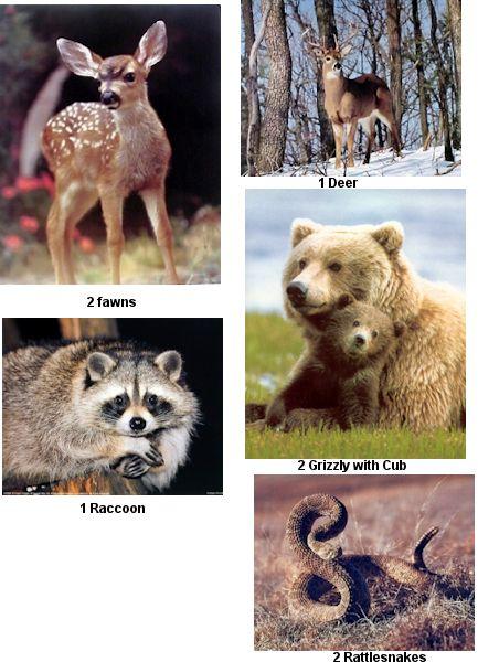 wildlife posters wholesale