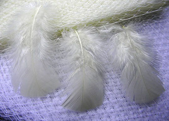 This Is A Gallon Bag Of White Turkey Feathers They Average 4 6 Long 10 16cm 15 24cm And Contain Mixture Fluffs Flats