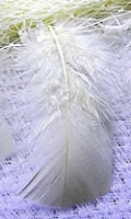 Gallon Bag White Turkey Feathers