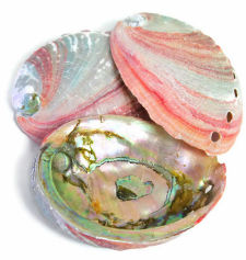 "Red Abalone Shells, 2"" to 4"""