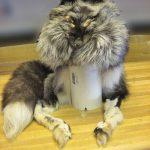 Silver fox mountain man hat